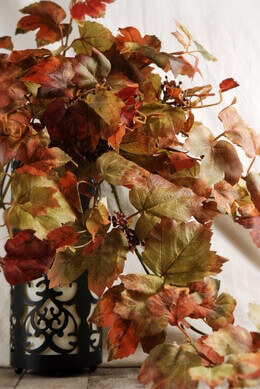 Autumn Grape Leaf Ivy