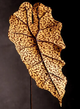 "12"" Leopard Leaves 20.5"" Elephant Ear Leaf"