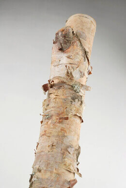 Natural Birch Pole White 2ft