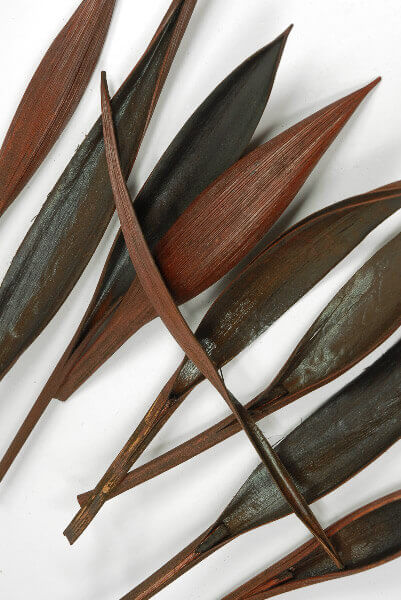"20 Mini Mahogany Natural Palm Paddles (9-13"" tall)  (20 paddles)"