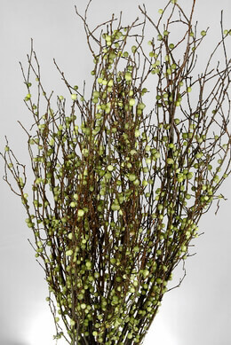 Natural Huckleberry Branches with Faux Berries | 36 Branches- 20 Inch