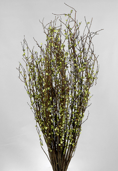 Natural Huckleberry Branches with Green Berries 36 Branches- 20 Inch