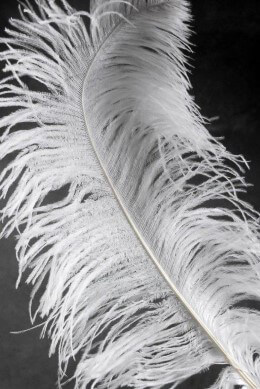 Ostrich Wing Feathers 1/2lb -- White 19-24 in -- First Quality