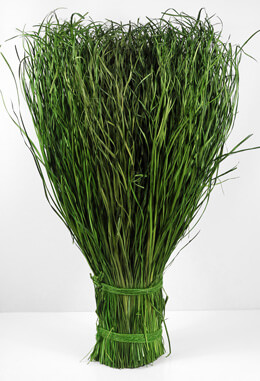 Preserved Grass Bundle