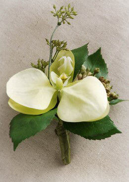 Cream and Green Orchid Corsage