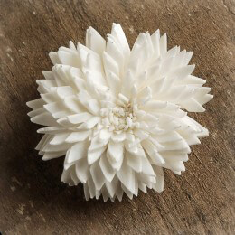 Sola Flowers China 1.5in | Pack of 12