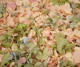 Preserved Hydrangea & Rose Petals in Pink and Green | 5 cups