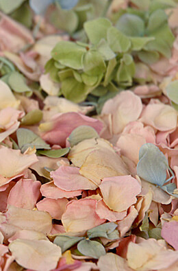 Preserved Lydia Rose  Hydrangea & Rose Petals| 5 cups