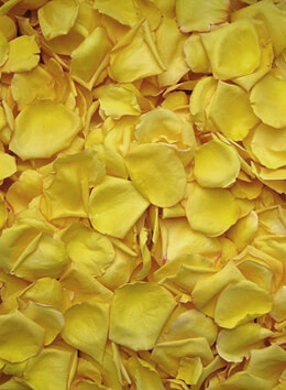 Rose Petals Sun Kissed Yellow Freeze Dried (5 cups/pkg)