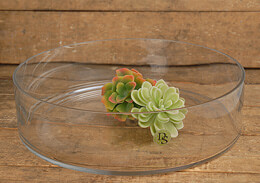 "Clear Glass Terrarium Dish 3"" x 12"""