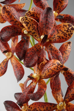 "24"" Artificial Orchids Orange Vandas"