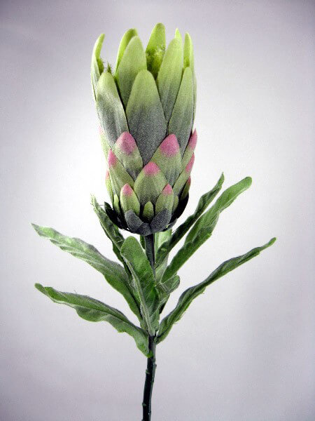 "27.5"" Green & Pink Protea Flowers"