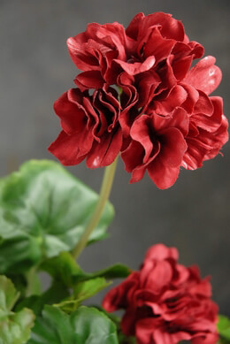 Artificial Geranium Silk
