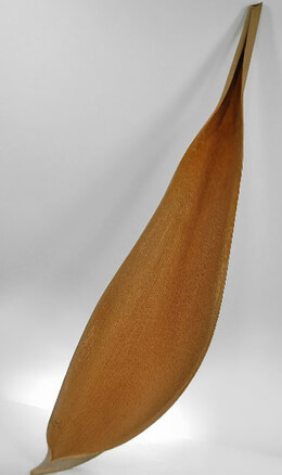 Natural Palm Paddles 38in