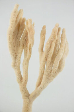 Natural Finger Sponges