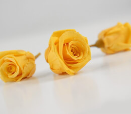 Preserved Roses Golden Yellow 1in (12 rose heads)