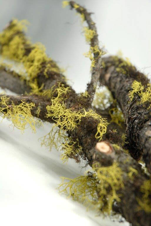 Natural Moss & Lichen Branch 25-29in