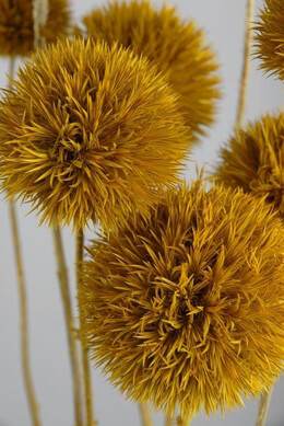 Preserved Thistles Yellow (Pack of 10)
