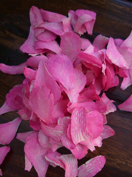 Preserved Orchid Petals Bright Pink