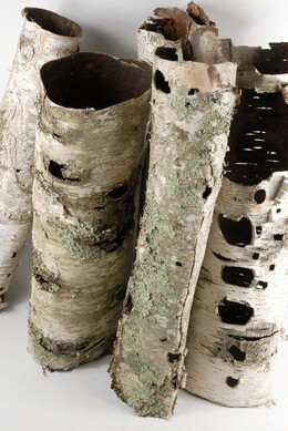 Natural Birch Bark Tubes 16in