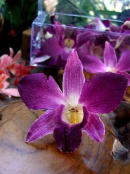 30 Preserved Purple Orchids Purple