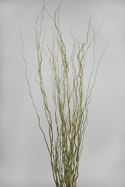 Natural Salix Bay Willow Branches Light Basil Green 46in