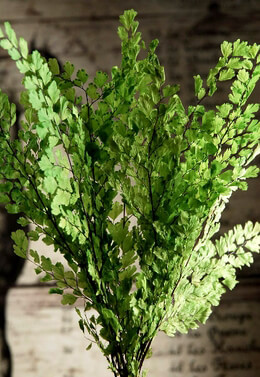 Adiantum Luthi Ferns Lime Green Preserved 8in (8 stems)