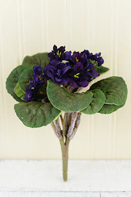African Violet Bush Purple 10.5in