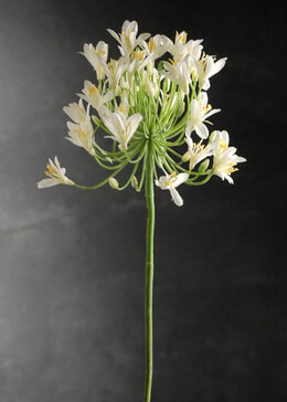Artificial Agapanthus Flower White 36in