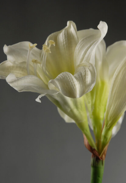 Amaryllis Flowers Artificial