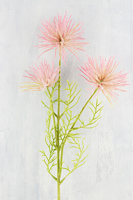 Anemone Seed Flower Pink 26in