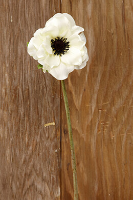 Cream White Silk Anemone Flowers 15in
