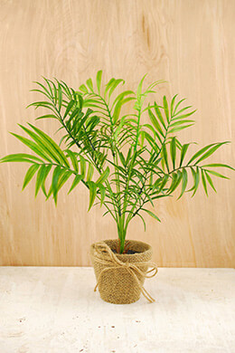 Areca Palm Artificial 15in