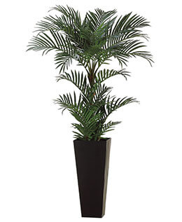 Areca Palm Tree 6ft