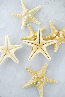 Armored Starfish 4-5in (Pack of 7)