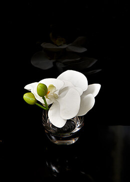 Artificial Orchid White 6in