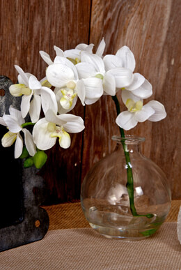 White Orchid Stem in Glass Vase 10""