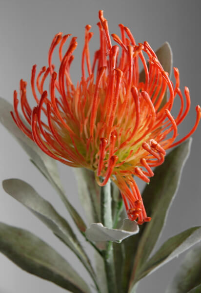 Artificial Proteas Orange Pin Cushion Protea