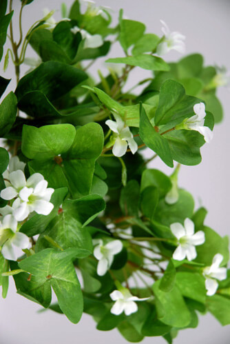 Artificial Shamrocks with white flowers
