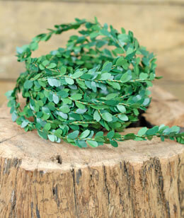 Miniature Boxwood Wired Garland 15ft