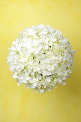 "9"" White Silk Hydrangea Balls, Hanging Decorations, Wedding Flowers"