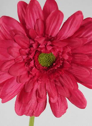 12 Beauty Red Gerbera Daisy Sprays