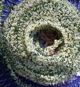 Berry Roping White & Green 25'