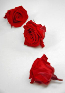 Preserved Roses Red 1in | 12 heads