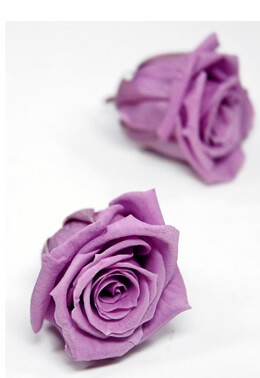 12 Lavender 1in Preserved Roses