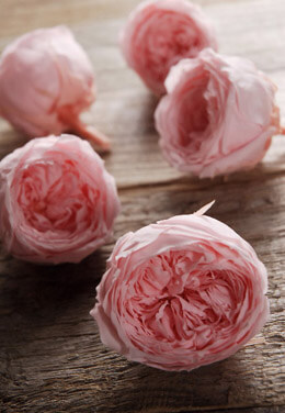 "8 Pink Preserved Roses  2.25"" Size"