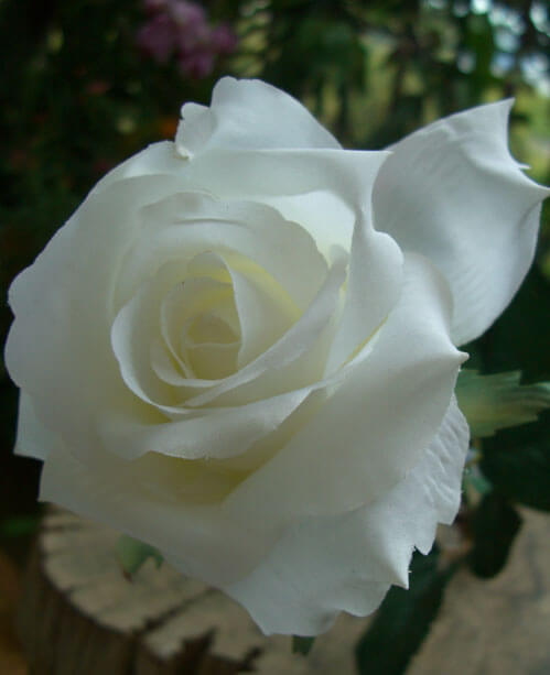 One Dozen  White Silk Roses