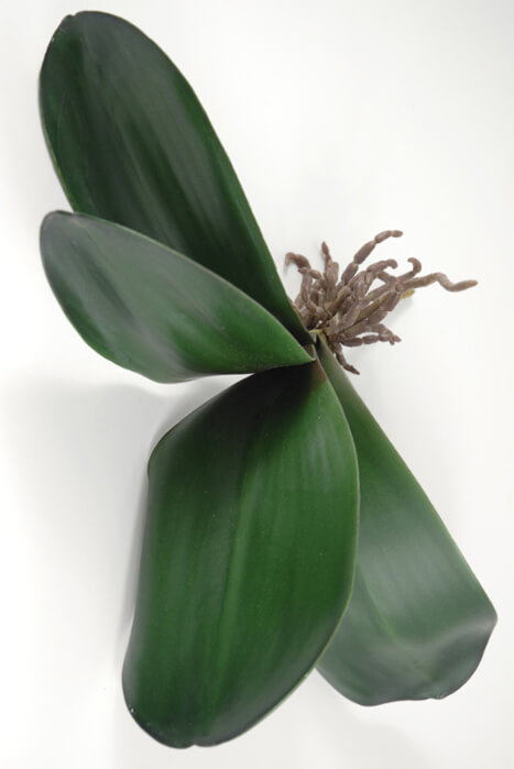Artificial Orchid Leaves and Roots 22in