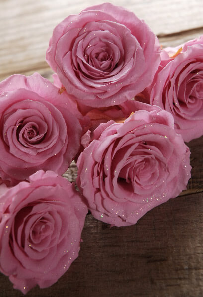 Preserved Soft  Princess Pink Roses (8 rose heads)
