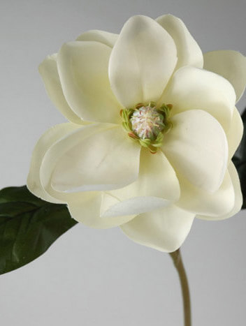 Silk Magnolia Flowers 25""
